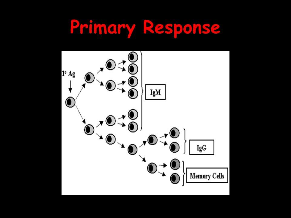 Primary Response