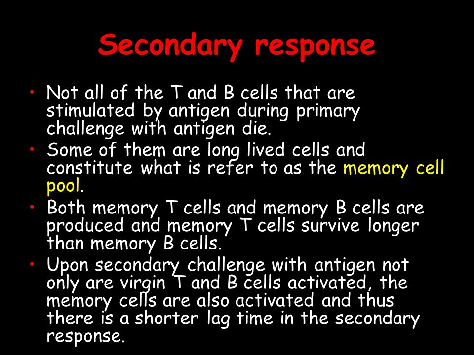 Secondary response Not all of the T and B cells that are stimulated by antigen during primary challenge with antigen die.