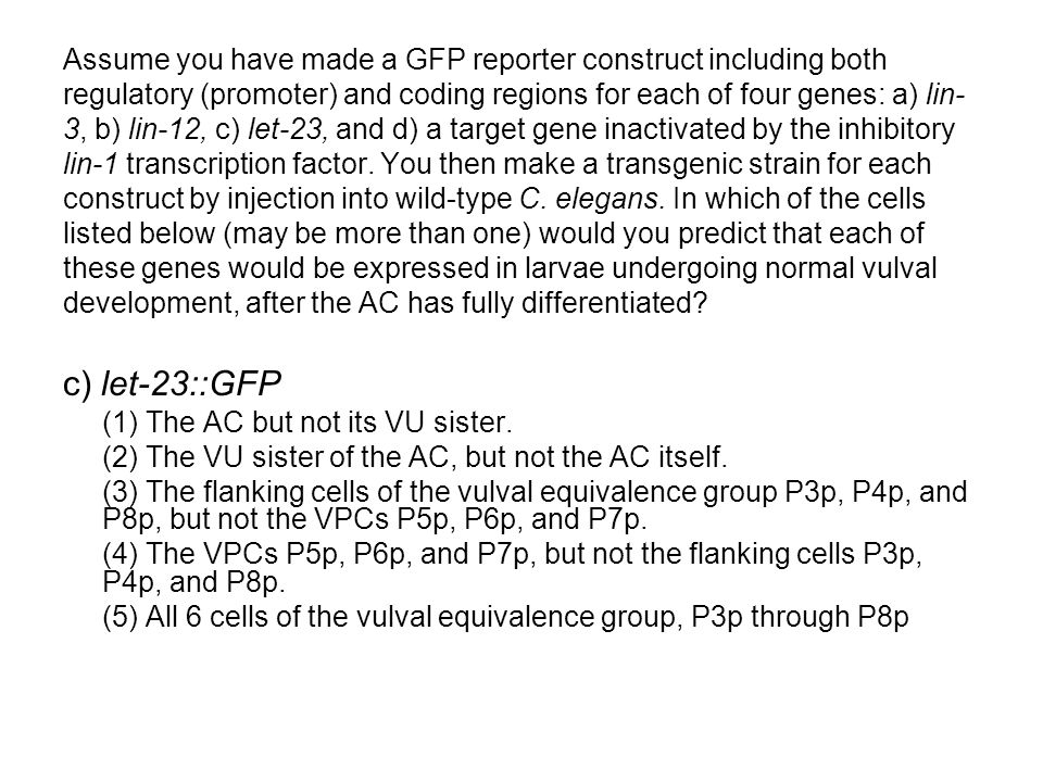 Assume you have made a GFP reporter construct including both regulatory (promoter) and coding regions for each of four genes: a) lin- 3, b) lin-12, c) let-23, and d) a target gene inactivated by the inhibitory lin-1 transcription factor.