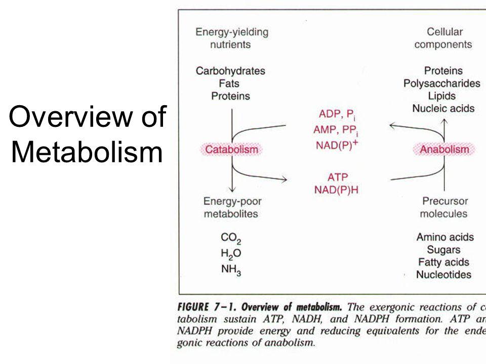 Galactose is converted to glucose-6P via a four step reaction involving UDP-glucose Hexokinase Fructokinase