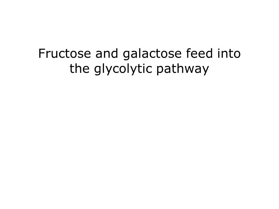 Fructose and galactose feed into the glycolytic pathway