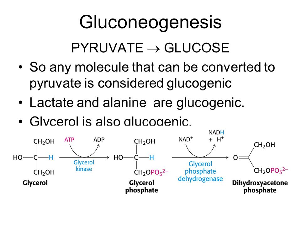 Gluconeogenesis PYRUVATE  GLUCOSE So any molecule that can be converted to pyruvate is considered glucogenic Lactate and alanine are glucogenic.