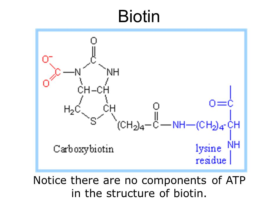 Biotin Notice there are no components of ATP in the structure of biotin.