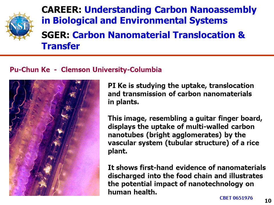 CAREER: Understanding Carbon Nanoassembly in Biological and Environmental Systems SGER: Carbon Nanomaterial Translocation & Transfer PI Ke is studying the uptake, translocation and transmission of carbon nanomaterials in plants.