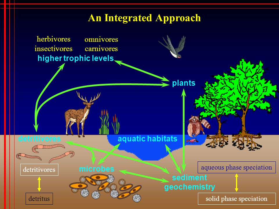 An Integrated Approach sediment geochemistry detritivores aqueous phase speciation solid phase speciation plants microbes detritus detritivores aquatic habitats higher trophic levels insectivores herbivores omnivores carnivores