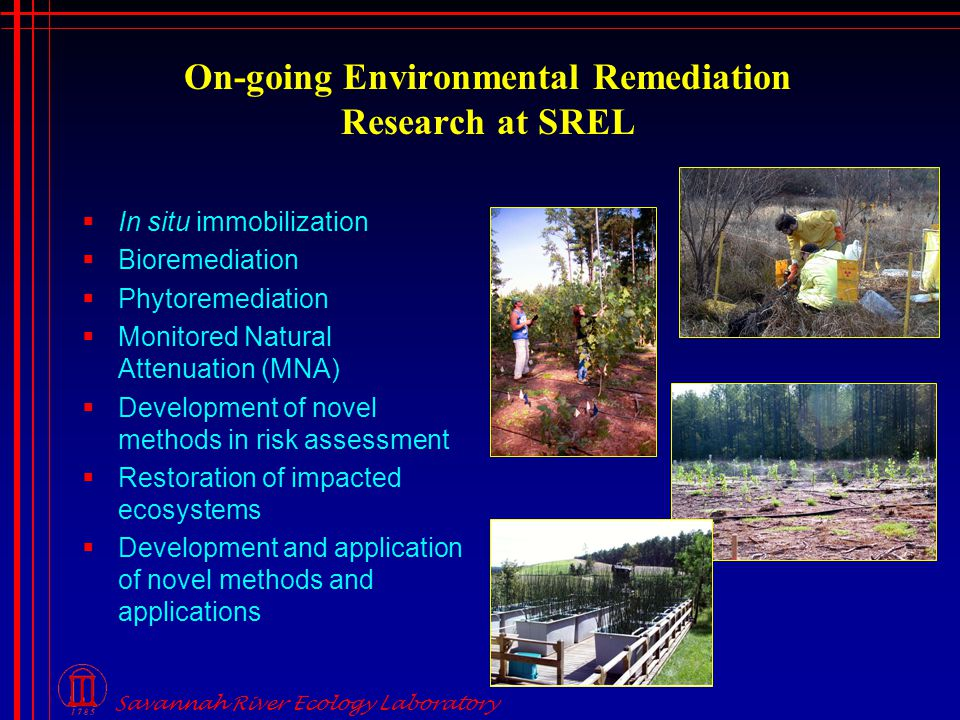 Savannah River Ecology Laboratory On-going Environmental Remediation Research at SREL  In situ immobilization  Bioremediation  Phytoremediation  Monitored Natural Attenuation (MNA)  Development of novel methods in risk assessment  Restoration of impacted ecosystems  Development and application of novel methods and applications
