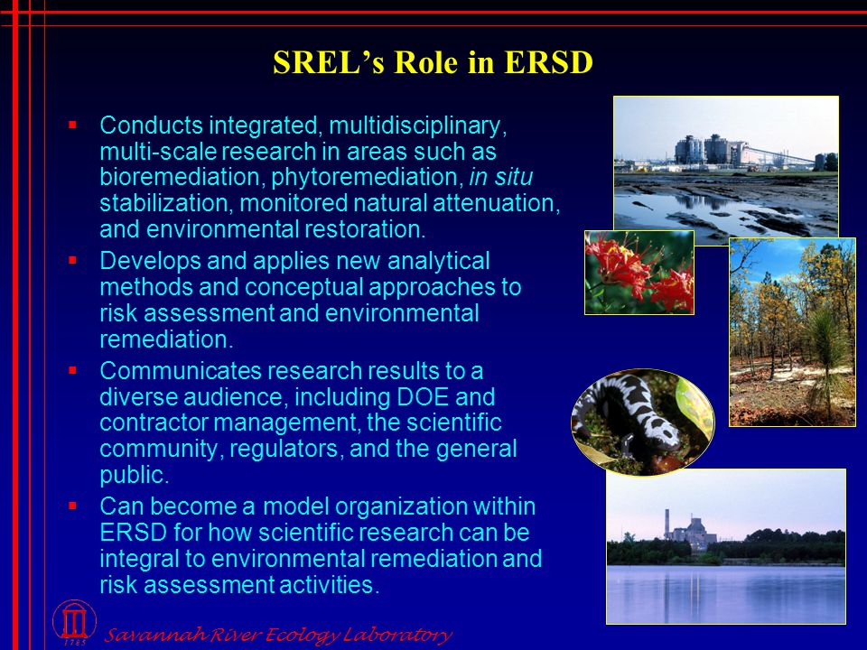 Savannah River Ecology Laboratory SREL's Role in ERSD  Conducts integrated, multidisciplinary, multi-scale research in areas such as bioremediation, phytoremediation, in situ stabilization, monitored natural attenuation, and environmental restoration.