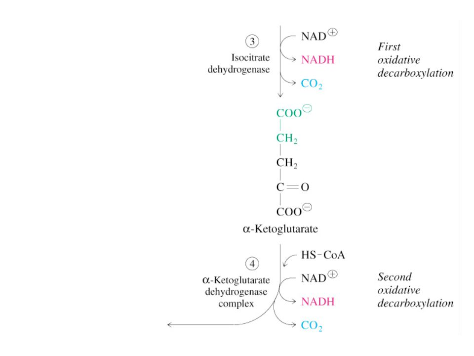 12.6 Regulation of the Citric Acid Cycle Pathway controlled by: (1) Allosteric modulators (2) Covalent modification of cycle enzymes (3) Supply of acetyl CoA (4) Regulation of pyruvate dehydrogenase complex controls acetyl CoA supply
