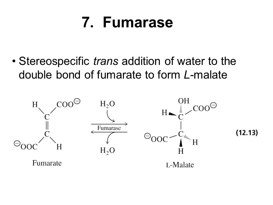 7. Fumarase Stereospecific trans addition of water to the double bond of fumarate to form L-malate