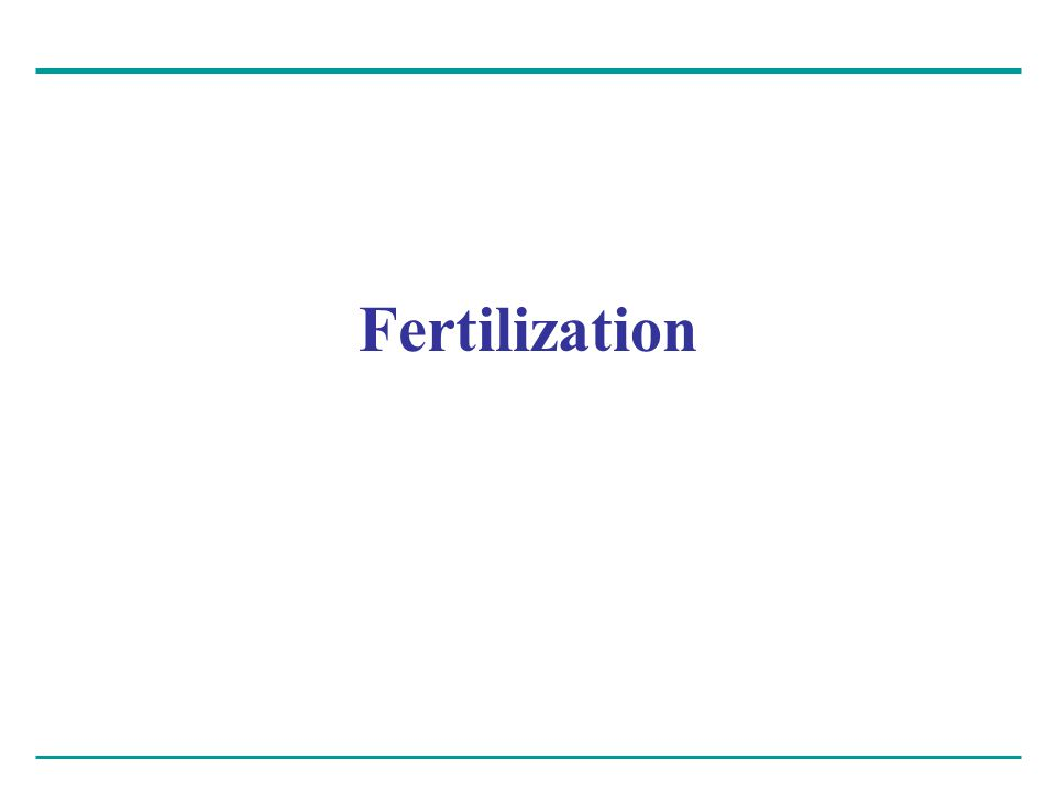 The main function of fertilization – Is to bring the haploid nuclei of sperm and egg together to form a diploid zygote Contact of the sperm with the egg's surface – Initiates metabolic reactions within the egg that trigger the onset of embryonic development Two phenomena are important here – Acrosomal reaction – Cortical reaction