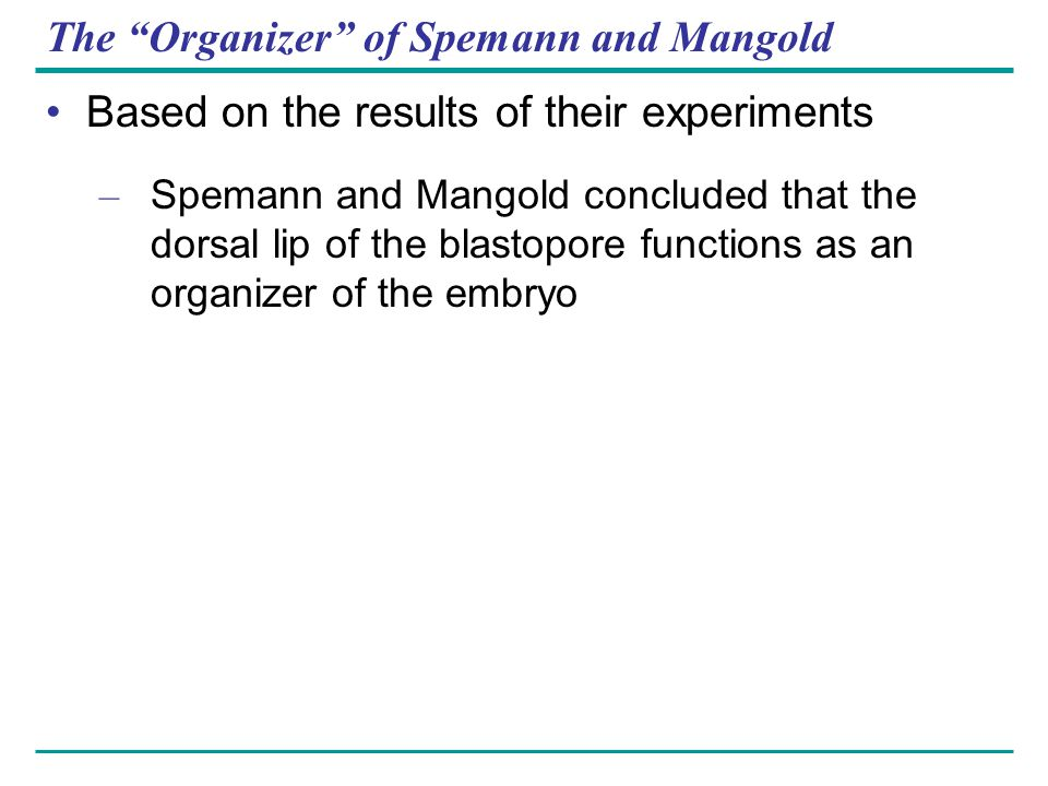 "The ""Organizer"" of Spemann and Mangold Based on the results of their experiments – Spemann and Mangold concluded that the dorsal lip of the blastopore"