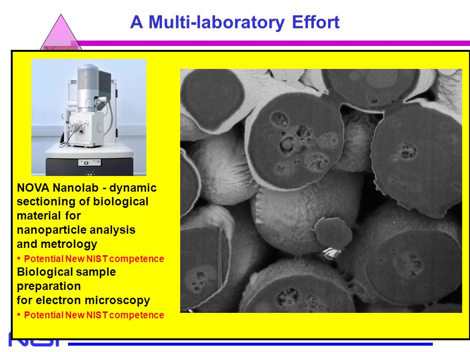 MSEL MEL CSTL A Multi-laboratory Effort Modeling Cell Culture Specimen Preparation Microscopy Analytical Nanometrology Focused Ion Beam NOVA Nanolab B