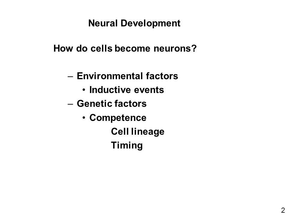Neural Development 2 How do cells become neurons.