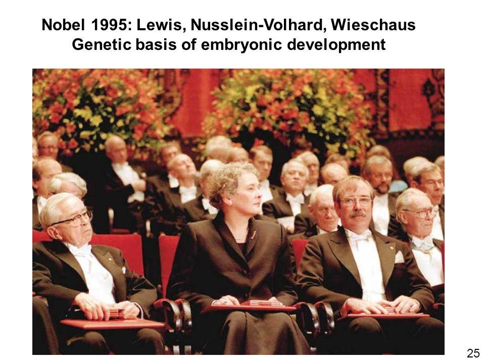 Nobel 1995: Lewis, Nusslein-Volhard, Wieschaus Genetic basis of embryonic development 25