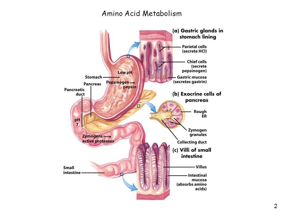 2 Amino Acid Metabolism