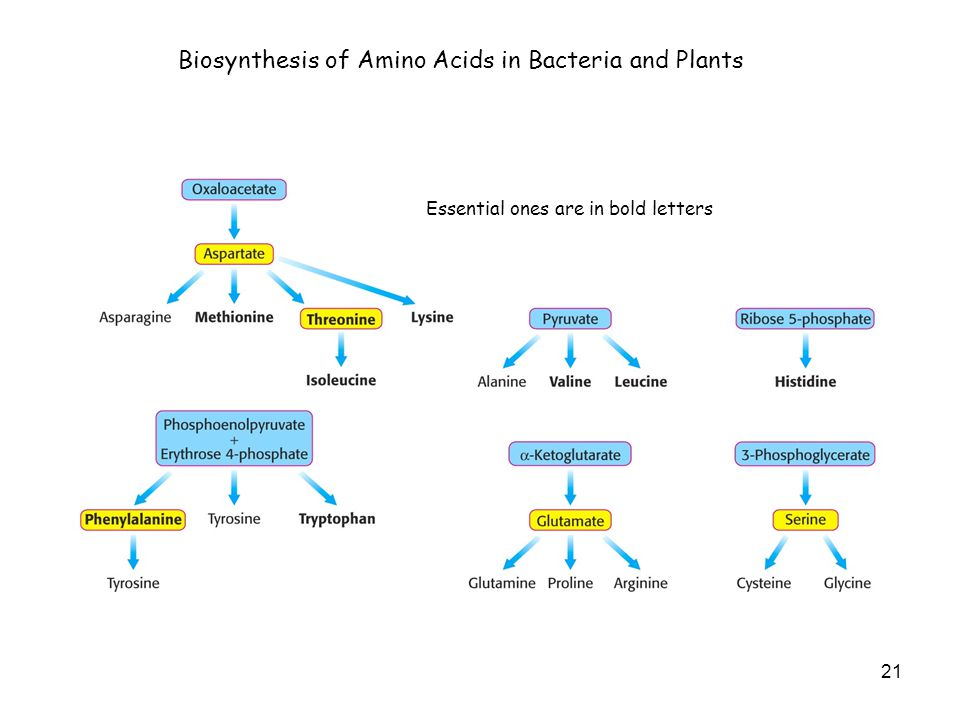 21 Biosynthesis of Amino Acids in Bacteria and Plants Essential ones are in bold letters