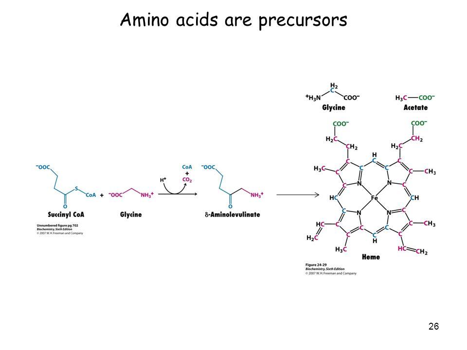 Amino acids are precursors 26