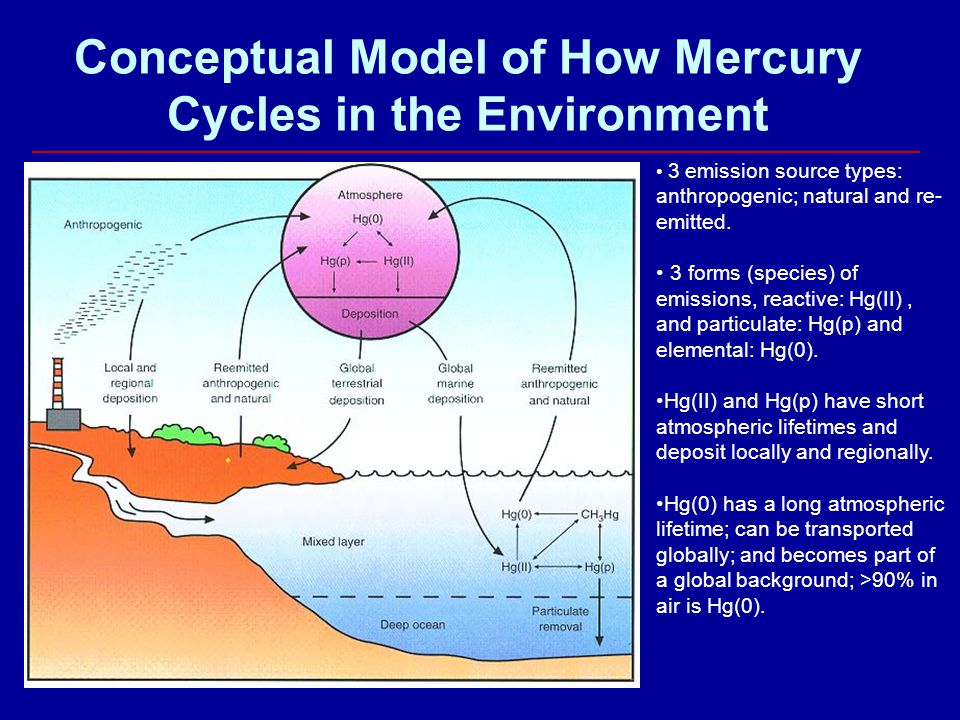 Conceptual Model of How Mercury Cycles in the Environment 3 emission source types: anthropogenic; natural and re- emitted. 3 forms (species) of emissi