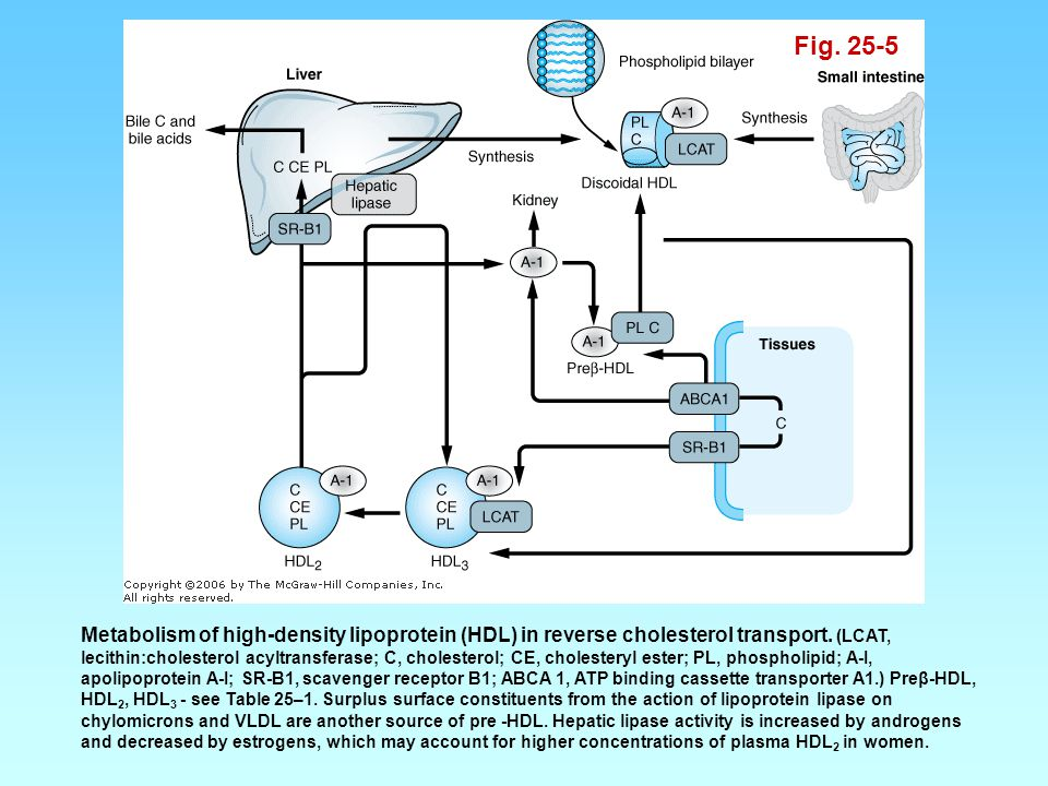 Fig. 25-5 Metabolism of high-density lipoprotein (HDL) in reverse cholesterol transport. (LCAT, lecithin:cholesterol acyltransferase; C, cholesterol;