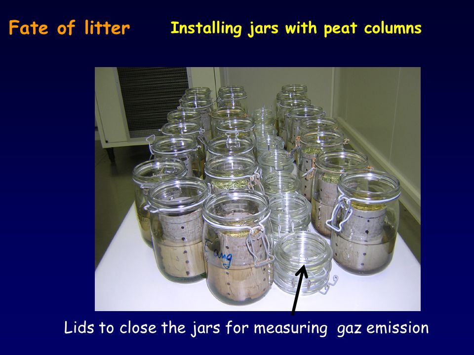 Fate of litter Installing jars with peat columns Lids to close the jars for measuring gaz emission