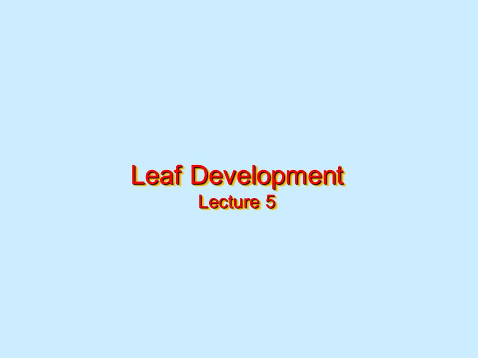 Leaf Development Lecture 5
