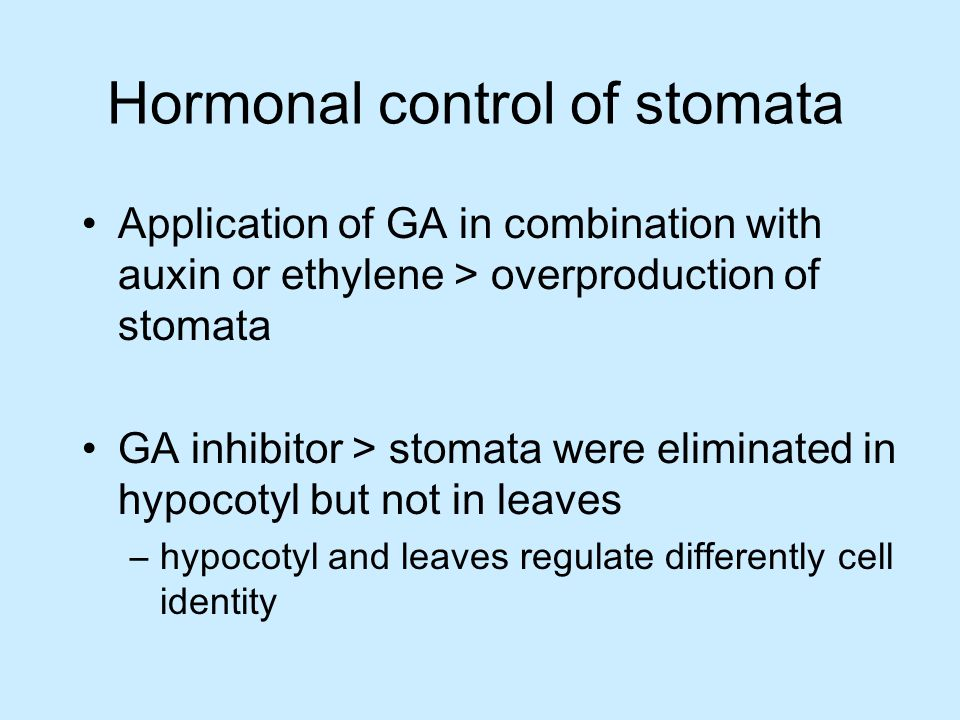Hormonal control of stomata Application of GA in combination with auxin or ethylene > overproduction of stomata GA inhibitor > stomata were eliminated in hypocotyl but not in leaves –hypocotyl and leaves regulate differently cell identity
