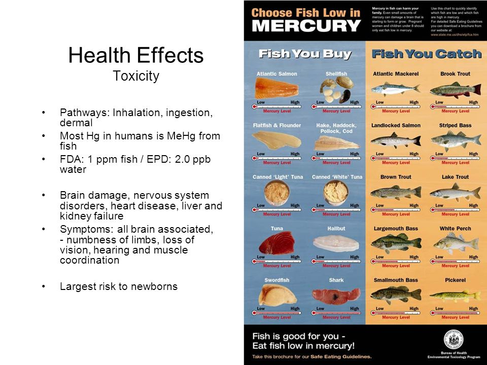 Health Effects Toxicity Pathways: Inhalation, ingestion, dermal Most Hg in humans is MeHg from fish FDA: 1 ppm fish / EPD: 2.0 ppb water Brain damage,