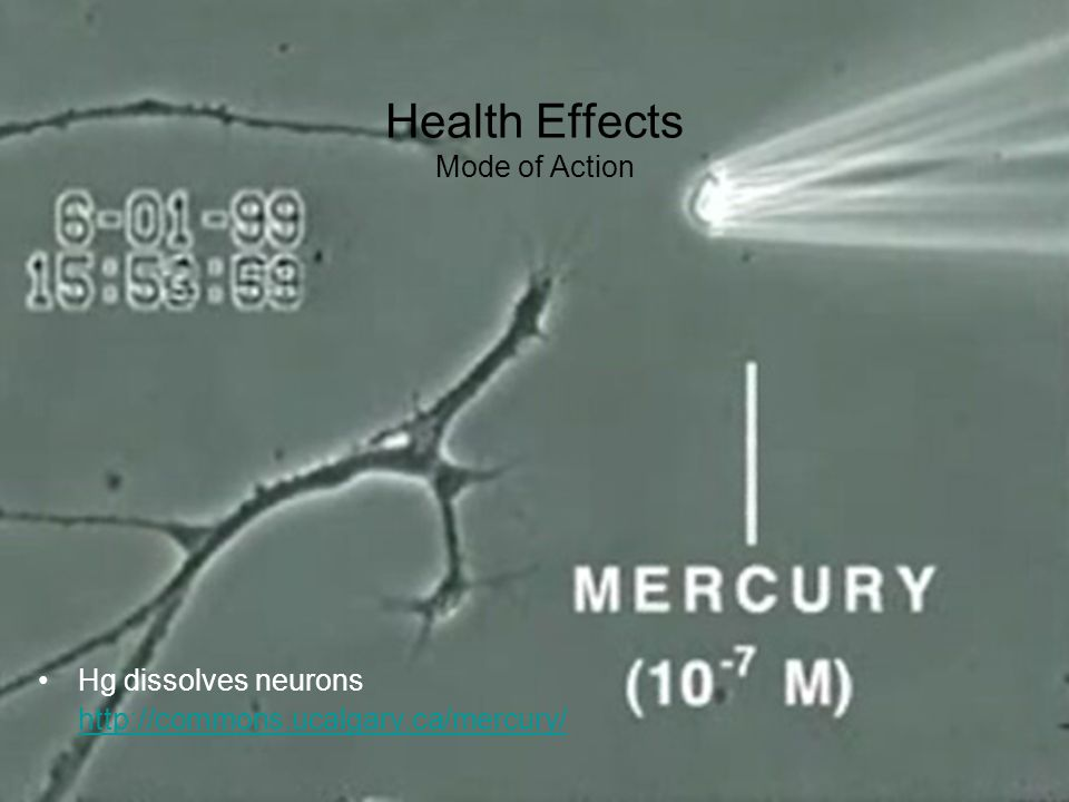 Health Effects Mode of Action Hg dissolves neurons http://commons.ucalgary.ca/mercury/