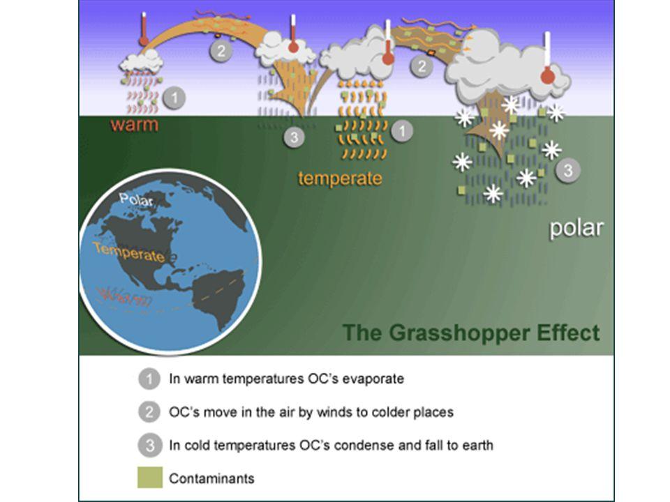 Grasshopper Effect