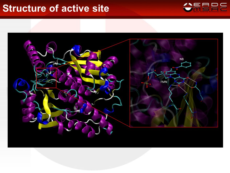 Structure of active site