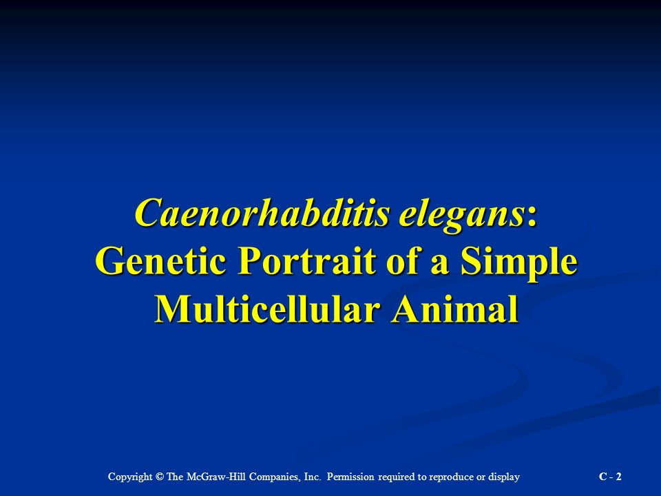 Copyright © The McGraw-Hill Companies, Inc. Permission required to reproduce or display C - 2 Caenorhabditis elegans: Genetic Portrait of a Simple Mul