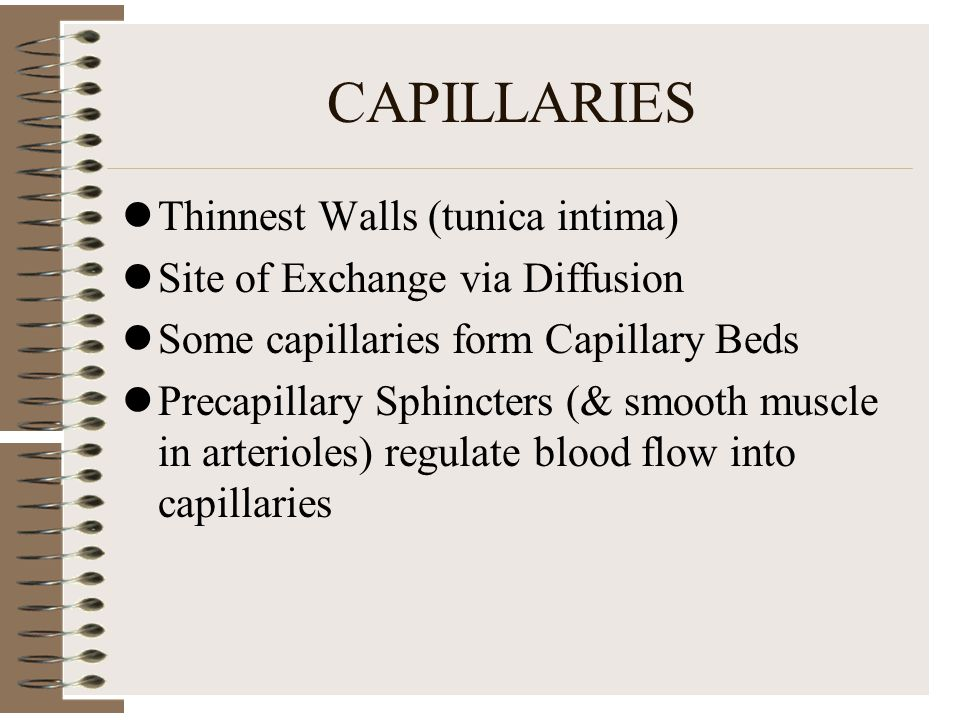 CAPILLARIES Thinnest Walls (tunica intima) Site of Exchange via Diffusion Some capillaries form Capillary Beds Precapillary Sphincters (& smooth muscl