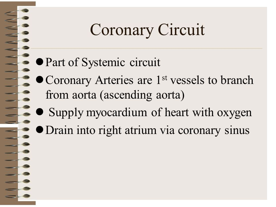 Coronary Circuit Part of Systemic circuit Coronary Arteries are 1 st vessels to branch from aorta (ascending aorta) Supply myocardium of heart with ox