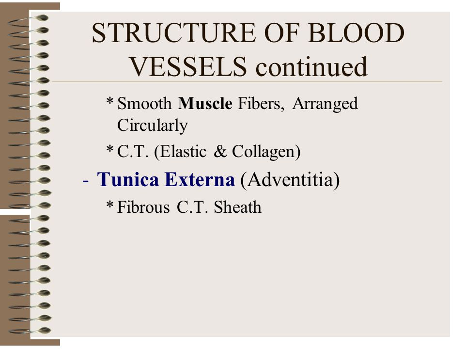 STRUCTURE OF BLOOD VESSELS continued *Smooth Muscle Fibers, Arranged Circularly *C.T. (Elastic & Collagen) -Tunica Externa (Adventitia) *Fibrous C.T.