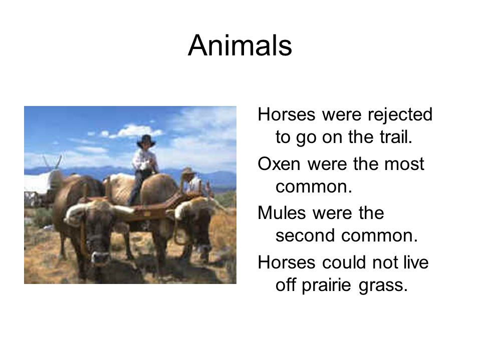 Animals Horses were rejected to go on the trail. Oxen were the most common. Mules were the second common. Horses could not live off prairie grass.