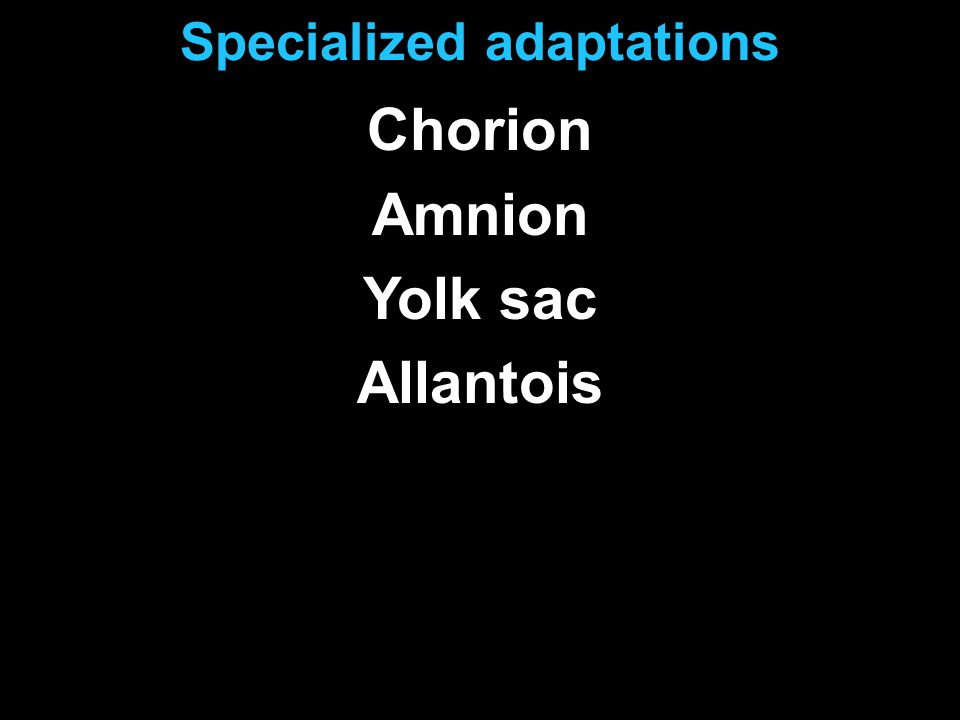 Specialized adaptations Chorion Amnion Yolk sac Allantois
