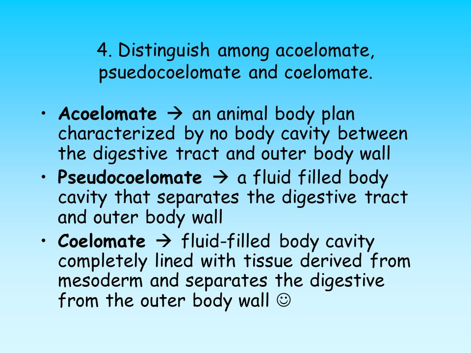 4. Distinguish among acoelomate, psuedocoelomate and coelomate. Acoelomate  an animal body plan characterized by no body cavity between the digestive