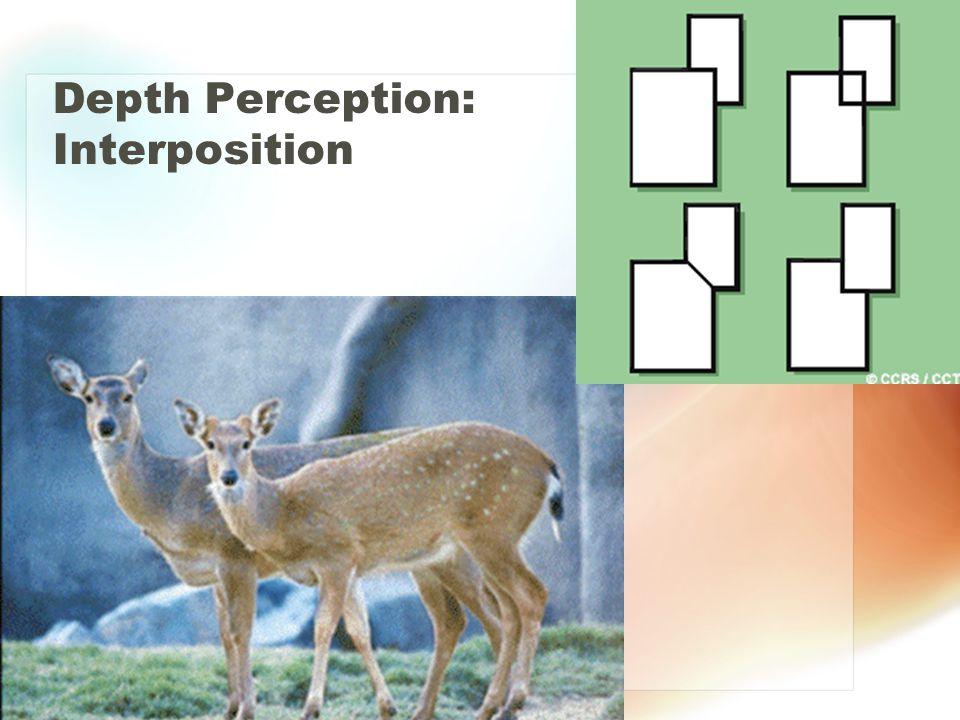 Depth Perception: Interposition