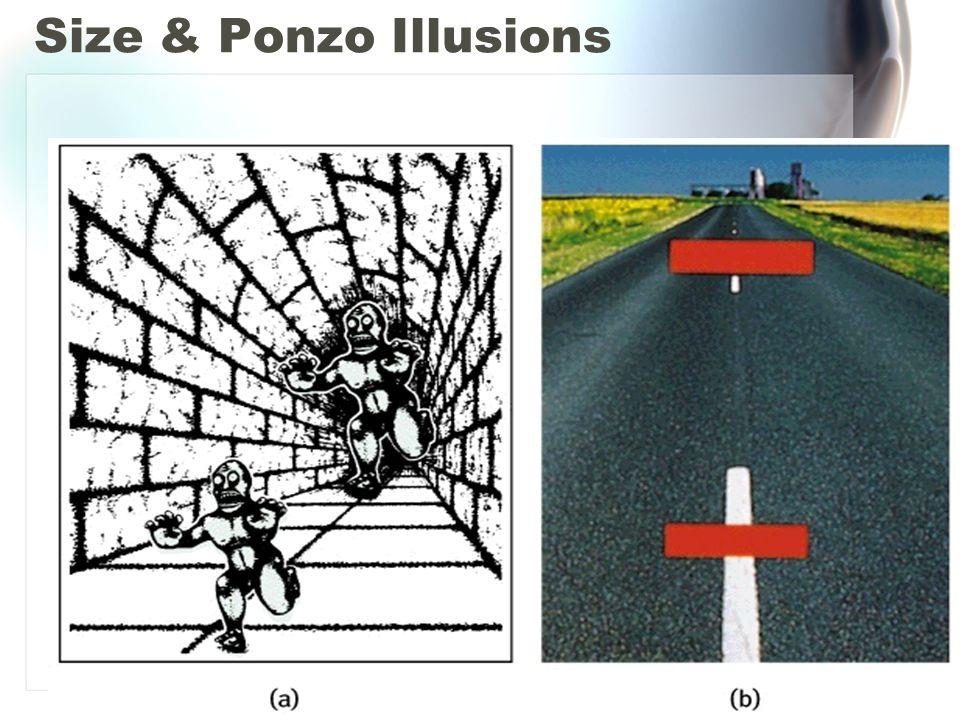 Size & Ponzo Illusions