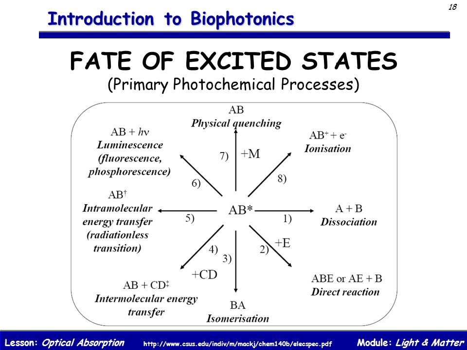 Module: Light & MatterLesson: Optical Absorption 18 Introduction to Biophotonics FATE OF EXCITED STATES (Primary Photochemical Processes) http://www.c