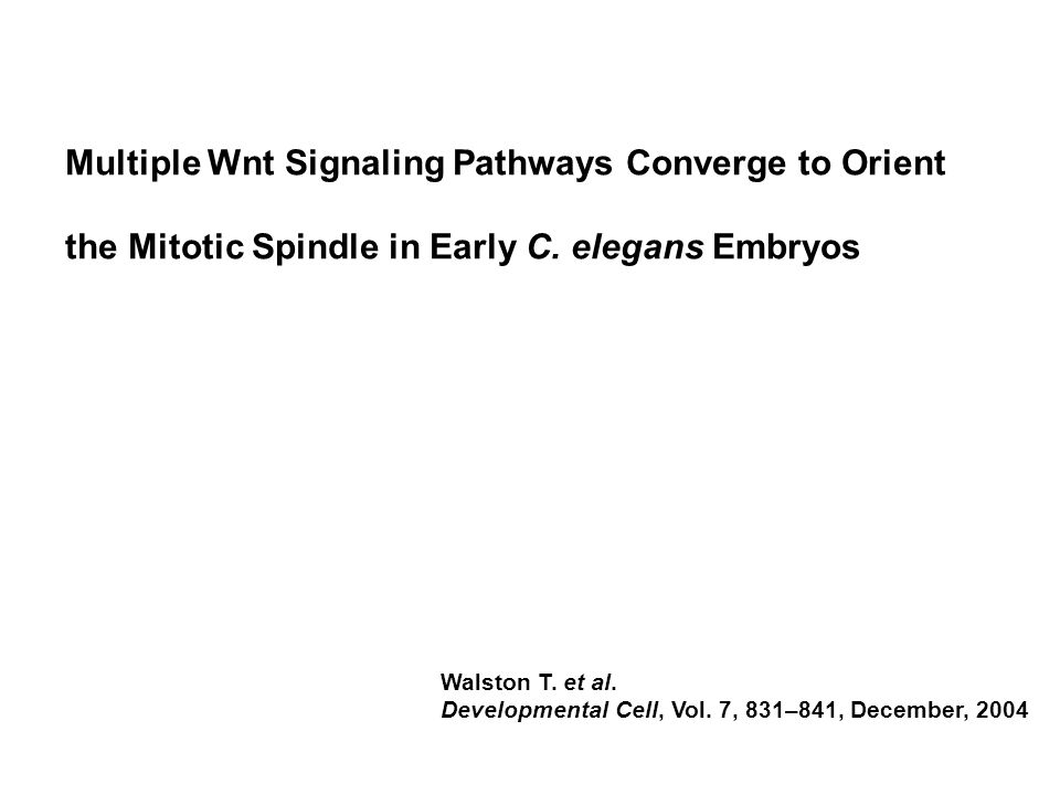 Multiple Wnt Signaling Pathways Converge to Orient the Mitotic Spindle in Early C.