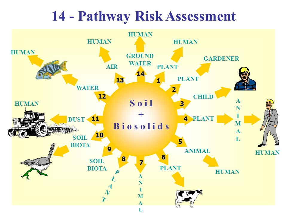 S o i l + B i o s o l i d s 1 3 2 4 5 6 7 8 9 10 11 12 13 14 PLANT HUMAN GROUND WATER HUMAN AIR PLANT GARDENER CHILD PLANT ANIMALANIMAL ANIMAL HUMAN PLANTPLANT ANIMALANIMAL SOIL BIOTA DUST HUMAN WATER HUMAN 14 - Pathway Risk Assessment