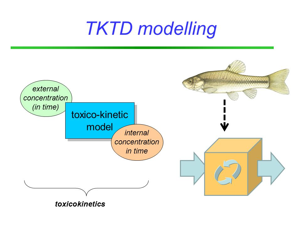 external concentration (in time) toxico-kinetic model toxico-kinetic model TKTD modelling internal concentration in time toxicokinetics