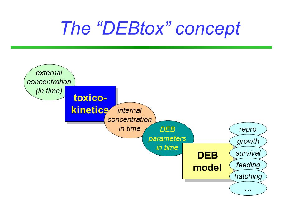 The DEBtox concept external concentration (in time) toxico- kinetics toxico- kinetics internal concentration in time DEB parameters in time DEB model DEB model repro growth survival feeding hatching …