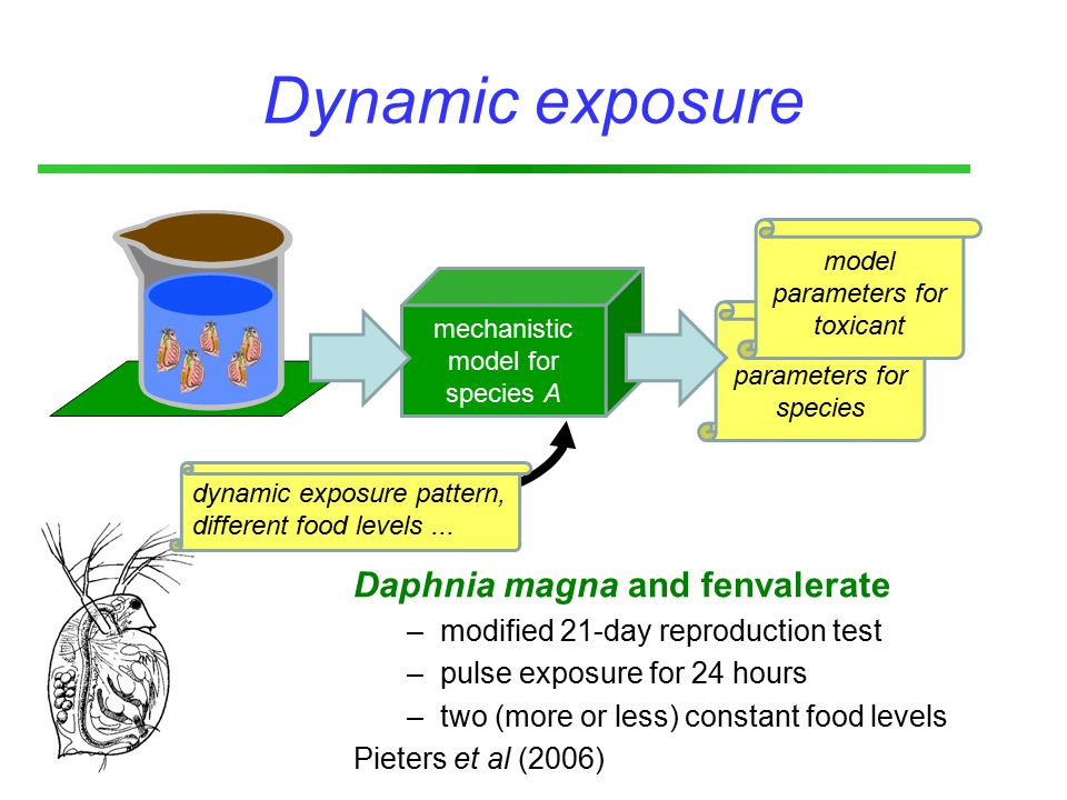 Dynamic exposure mechanistic model for species A dynamic exposure pattern, different food levels...