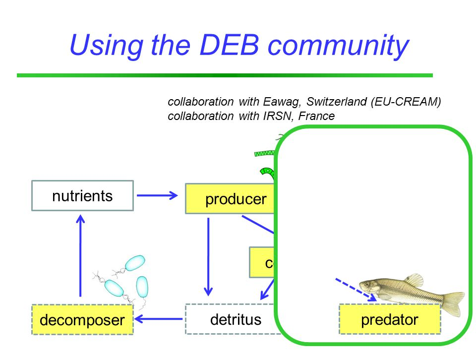 detritus consumer light producer Using the DEB community decomposer nutrients collaboration with Eawag, Switzerland (EU-CREAM) collaboration with IRSN, France predator