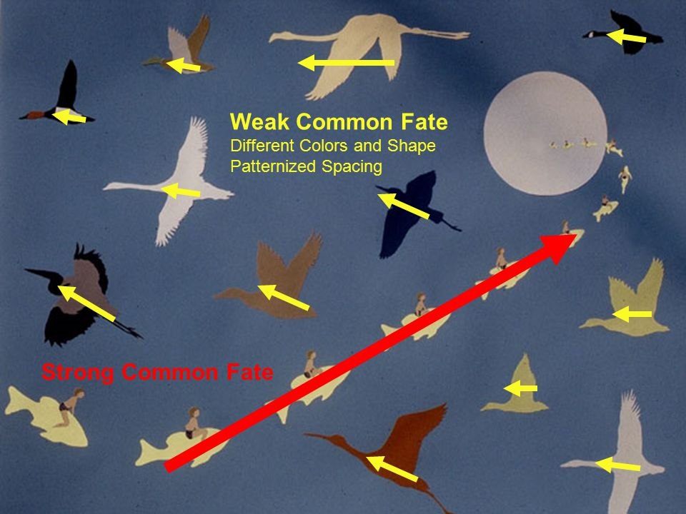 Principles of Visual Design 2720 Common Fate Strong Common Fate Weak Common Fate Different Colors and Shape Patternized Spacing