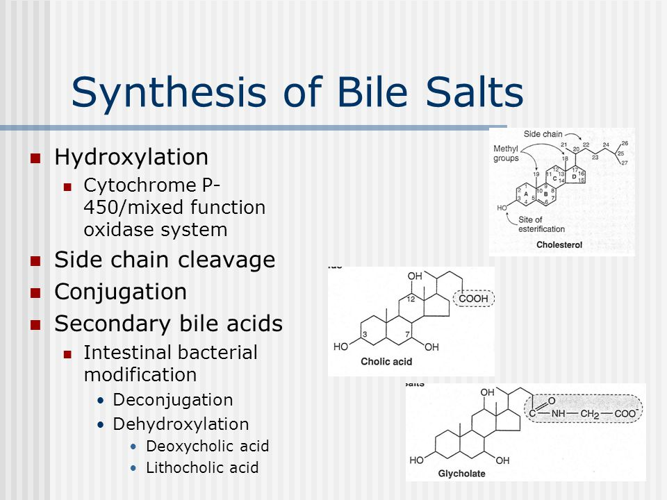 Synthesis of Bile Salts Hydroxylation Cytochrome P- 450/mixed function oxidase system Side chain cleavage Conjugation Secondary bile acids Intestinal bacterial modification Deconjugation Dehydroxylation Deoxycholic acid Lithocholic acid