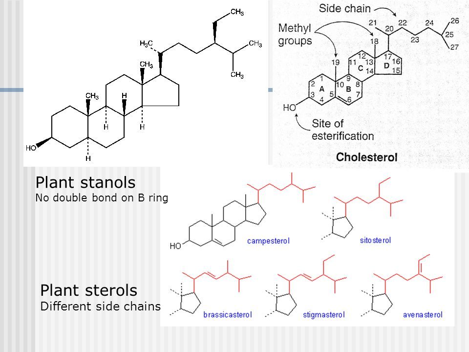 Plant sterols Different side chains Plant stanols No double bond on B ring