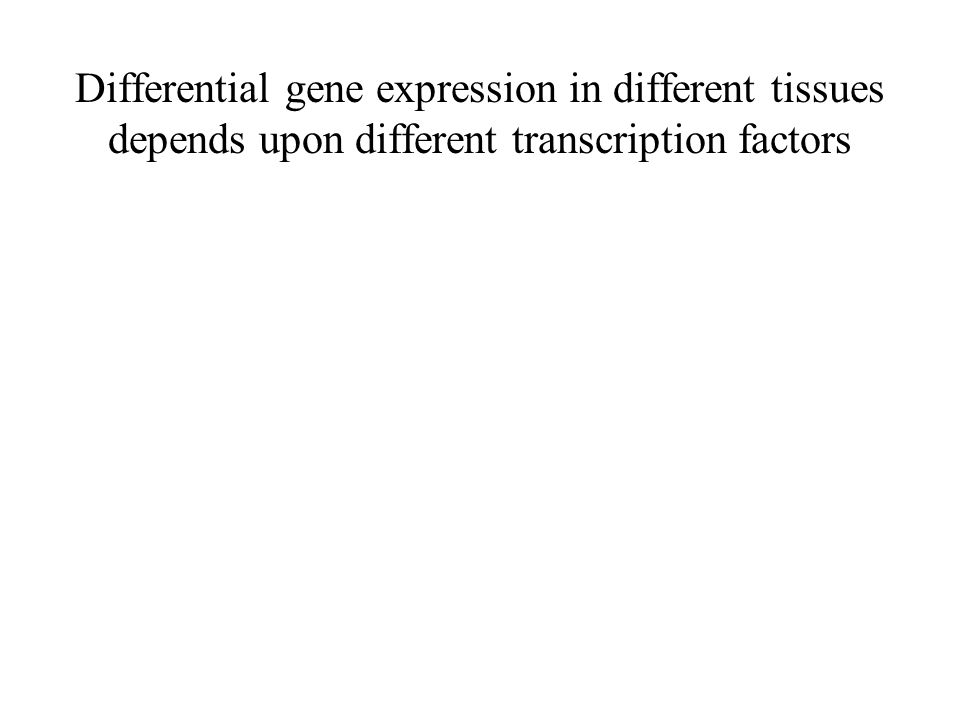 Differential gene expression in different tissues depends upon different transcription factors